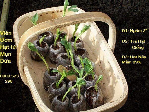 Viên nén ươm hạt hiệu quả trong việc tạo bầu ươm và Kích hầu hết các hạt giống hoa và rau nảy mầm: