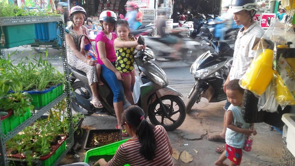 Viên nén giá thể mụn dừa BaTriVIna