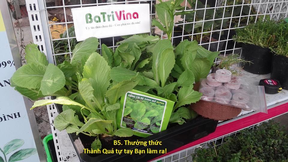 và Viên Nén Giá Thể mụn dừa BaTriVina