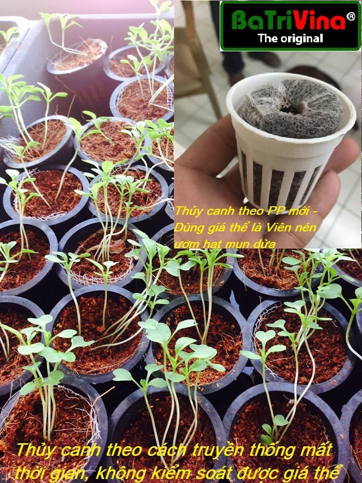 trồng thủy canh bằng viên nén ươm hạt