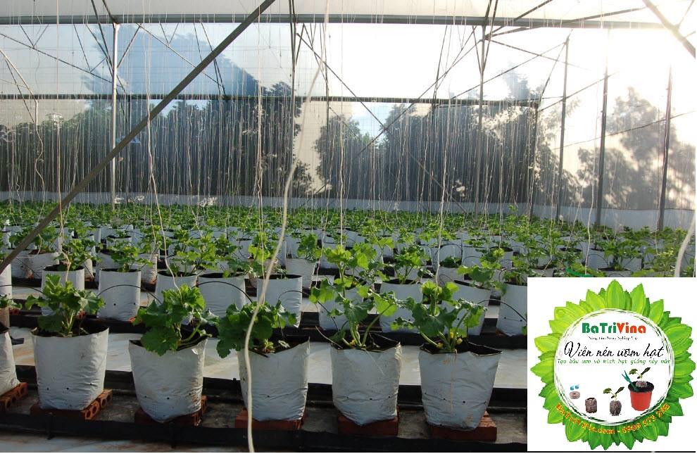 Túi nylon hai lớp trồng cây cao cấp batrivina