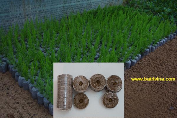 viên nén ươm hạt batrivina