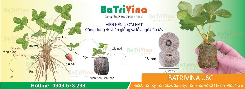 3, Công dụng của Màng bao bên ngoài của Viên Nén Ươm Hạt cây con trong trong mô hình thủy canh rau sạch